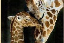 giraffen / by Bianca Brouwers