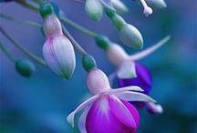 Flora / Növényvilág