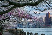NYC - Spring / After a rough winter, nothing better than watching the flowering trees in the many parks in New York City.