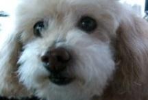 Dogs...you gotta love em / by Diane Gatto