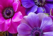 Amazing Flowers / Welcome to Amazing Flowers board feel free to pın and add frıends Thanks