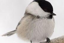 Beautiful nature / Natuur, vogels, wild