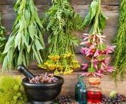 Herbs and Gardening