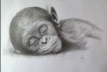 """♡♥♡""""Chimpanzee""""♡♥♡ / by Annette Hallonquist"""