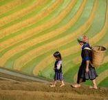 Vietnam Photo Tours / Photo tours in gorgeous Vietnam with David Lazar and Luminous Journeys... Tour dates: June 18 - July 2, 2018.