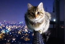 Cats on Roofs / by Lyons Roofing