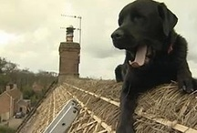 Dogs on Roofs / by Lyons Roofing