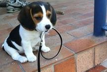 *Cutest Doggies* / The love for dogs.!