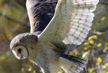 Owls ☆