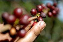 Café / Capsulas de café Mocava 100% compatibles con todas las máquinas Nespresso