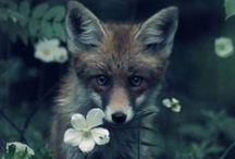 Nature is my god / la beauté de la nature. animaux, fleurs, forêt ... Et beaucoup de renards, parce que vraiment, je les trouve magnifique, à un point inimaginable !