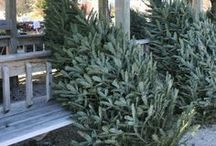 Christmas tree farm & shops