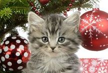 Christmas Kittens & Cats