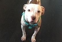 {up for ado(g)ption} / **dogs in need of adoption, asap**