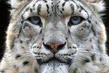 Amazing animals / Funny and beauty animals