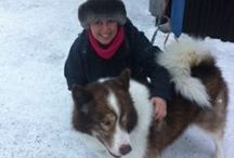 It's A Dogs Life / Our Kiruna doggie friends