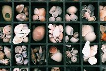 She Sells Sea Shells by the Sea Shore. / Childhood collection.... being continued on Pinterest! :)