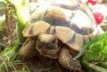 tartarughe e alimentazione