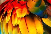 Rainbow & Multi-Colored Birds / Rainbow-colored and multi-colored birds.