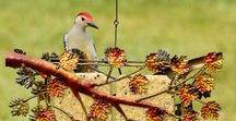 Bird Feeders, Houses & Baths / Beautiful bird feeders, bird houses, bird baths, and other bird accessories for your backyard. Do-it-yourself (DIY) projects for your backyard bird sanctuary.