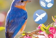 WindowAlert - Our Products / WindowAlert is an attractive window decal that reflects ultraviolet (UV) light. While humans can't see this light, it glows like a stoplight for bird. Now, protecting wild birds from windows is easy when you use WindowAlert's decals & UV liquid.