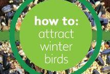 Bird Ideas, Tips & Tricks / Tips and tricks about wild birds.