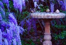 Garden AKA Bird Sanctuary / Make your backyard or garden a bird sanctuary with these beautiful flowers, plants, and bird accessories.