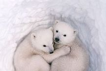 Furry cuteness / The cutest little animals you can find on the interweb