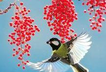 Flying Birds / Birds in flight; beautiful birds flying in nature.