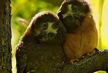 Owls / Photos of real owls / by The Owl Pages