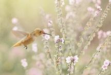 Beautiful Things / by Susan Walker