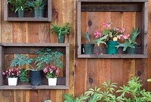 Growing Food in Containers and Small Spaces