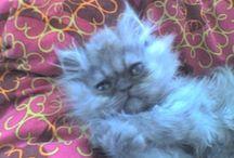 Cats  / Miau Miau