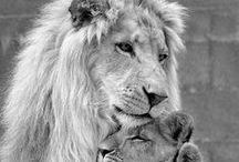 + LIONS +