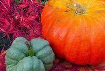 Recipes for Autumn