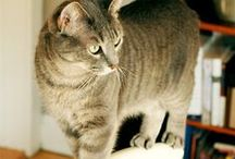 Cats.... / They're gorgeous, sweet and at the same time unbridled yet affectionate .... How I love them !!!!