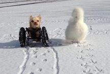 Inspirational Pets / Pets can be a great source of inspiration to humans as we see them overcome physical disabilities and past trauma.  We all have faced obstacles of some sort throughout our life.  Our pets who love us unconditionally are with us every step of the way.