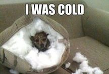 LOL (Laugh out Loud) / Animals that make us laugh!