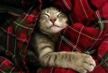 Adorable cats!! / Aww...cuteness of the feline variety