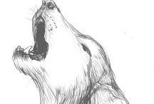 Animal Sketch / Animals