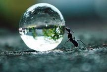 Insects / Insecten