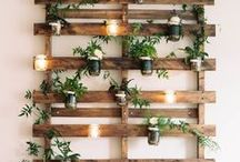 Indoor Gardening Ideas / Bring nature indoors!