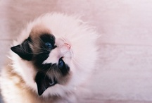 Cats, cats, cats, cats!!!!!! I love cats