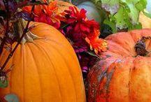 Fall Fun / Seasonal displays and decor ideas