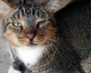 Spartacus! / The sometimes grumpy nursery cat.