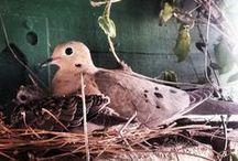Birds / For the love of birds
