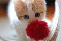 hermosos gatitos / by rosa maria dominguez herrera