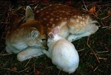 Heavenly♥Sweet♥Animals / by ♡Baby Melody♡