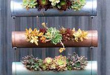 Rustic Garden Ideas / by Kendy Cooper