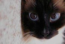 Cats! / Cos I'm a crazy cat lady